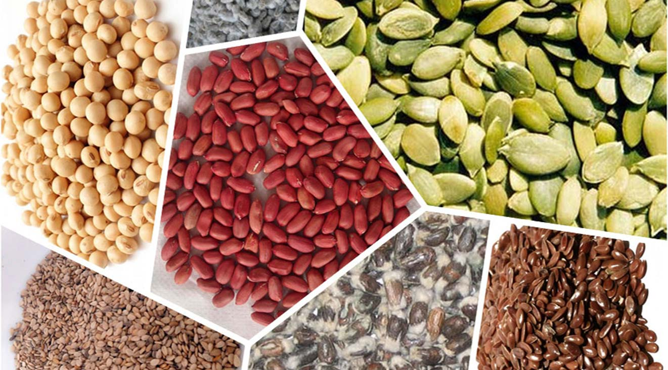 b5-Pulses-dal-import-by-JLV-agro-India