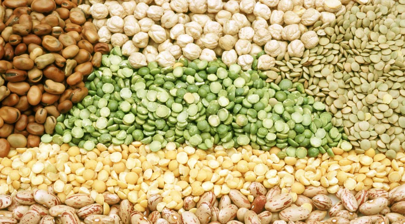 b6-oil-seeds-import-by-JLV-agro-India
